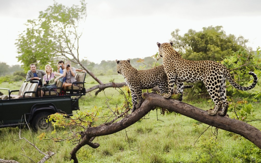 африканское сафари