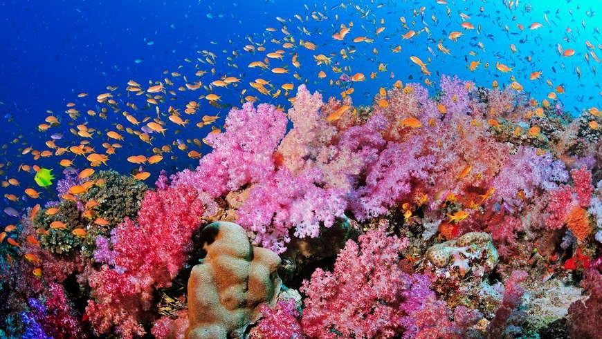 море рыбы